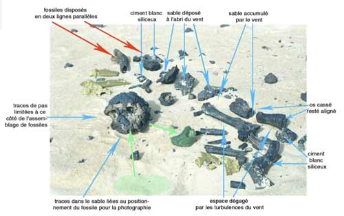 Beauvilain's photo of Toumai discovery