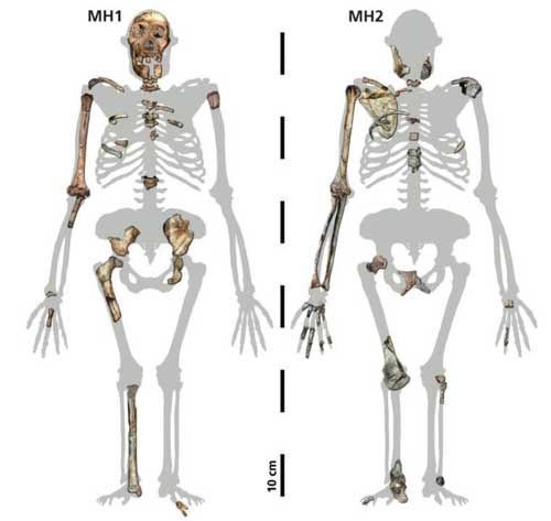macroevolution of hominids essay Free hominid papers, essays, and research papers  aquatic environment,  dealing with survival of the fittest and geographic isolation which caused  speciation.