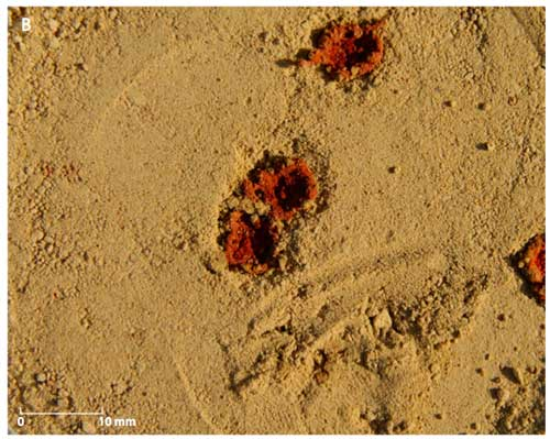 Red ochre droplet experiment, figure S10, B from Roebroeks et al 2012