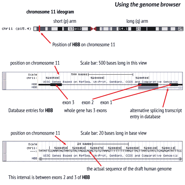 Guide to using the genome browser