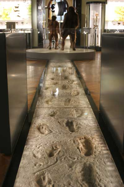 Laetoli footprints reconstruction, Naturhistorisches Museum, Wien