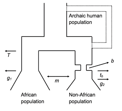 Population model schematic from Wall et al. 2009