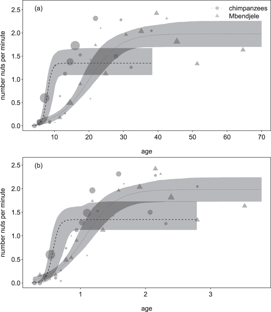Figure showing nutcracking speed versus age in chimpanzees and human hunter-gatherers