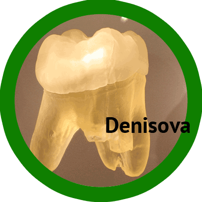 Denisova tooth photo sprite