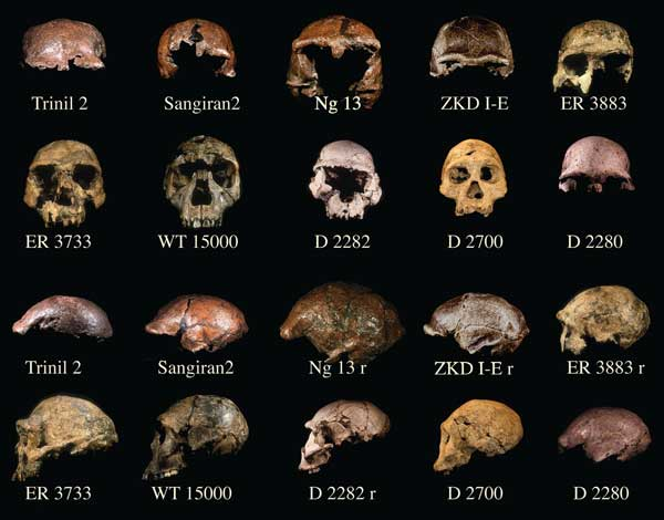 a research on the differences in pelvis and cranium specimens in human evolution An additional cranium  a significant question about human evolution revolves  tullar, r m the human species: its nature, evolution and.